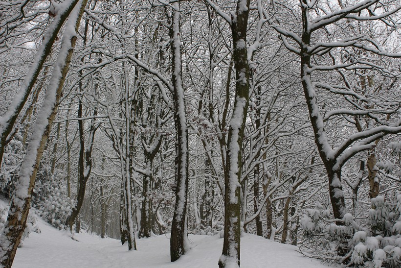 Frodsham Hill Woodland in the snow scene england cheshire 2014 winter