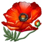 frodsham remembrance poppy 2015 frodsham town council