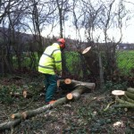 tree felling in frodsham cheshire