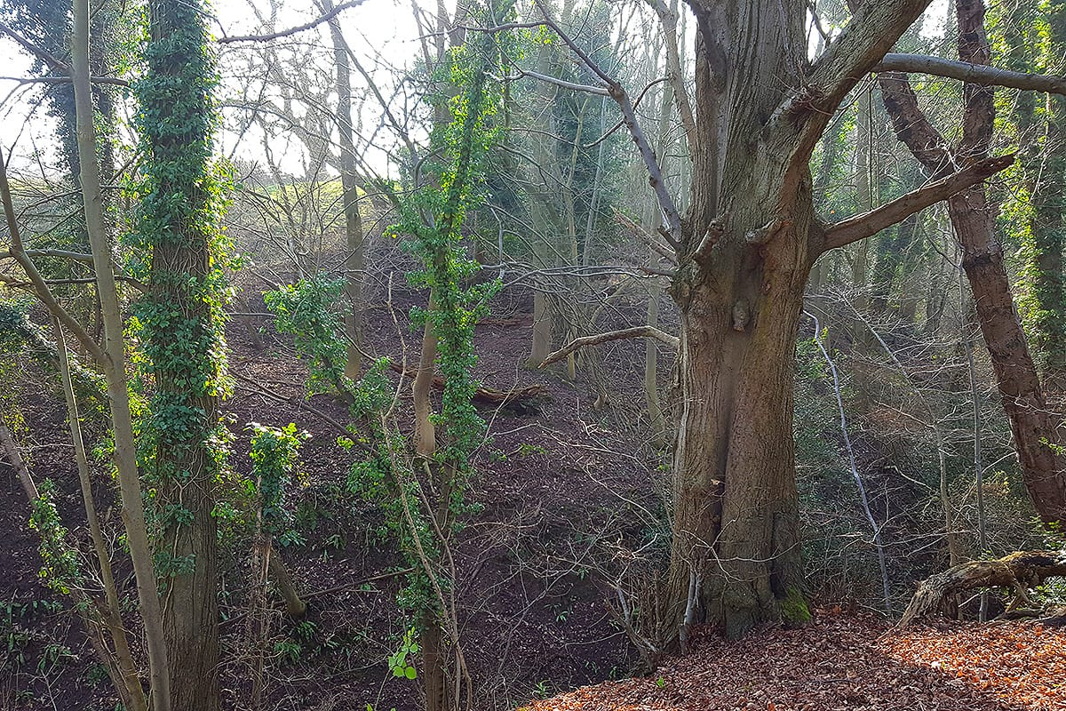 Warburtons Wood near Kingsley and Frodaham in Cheshire