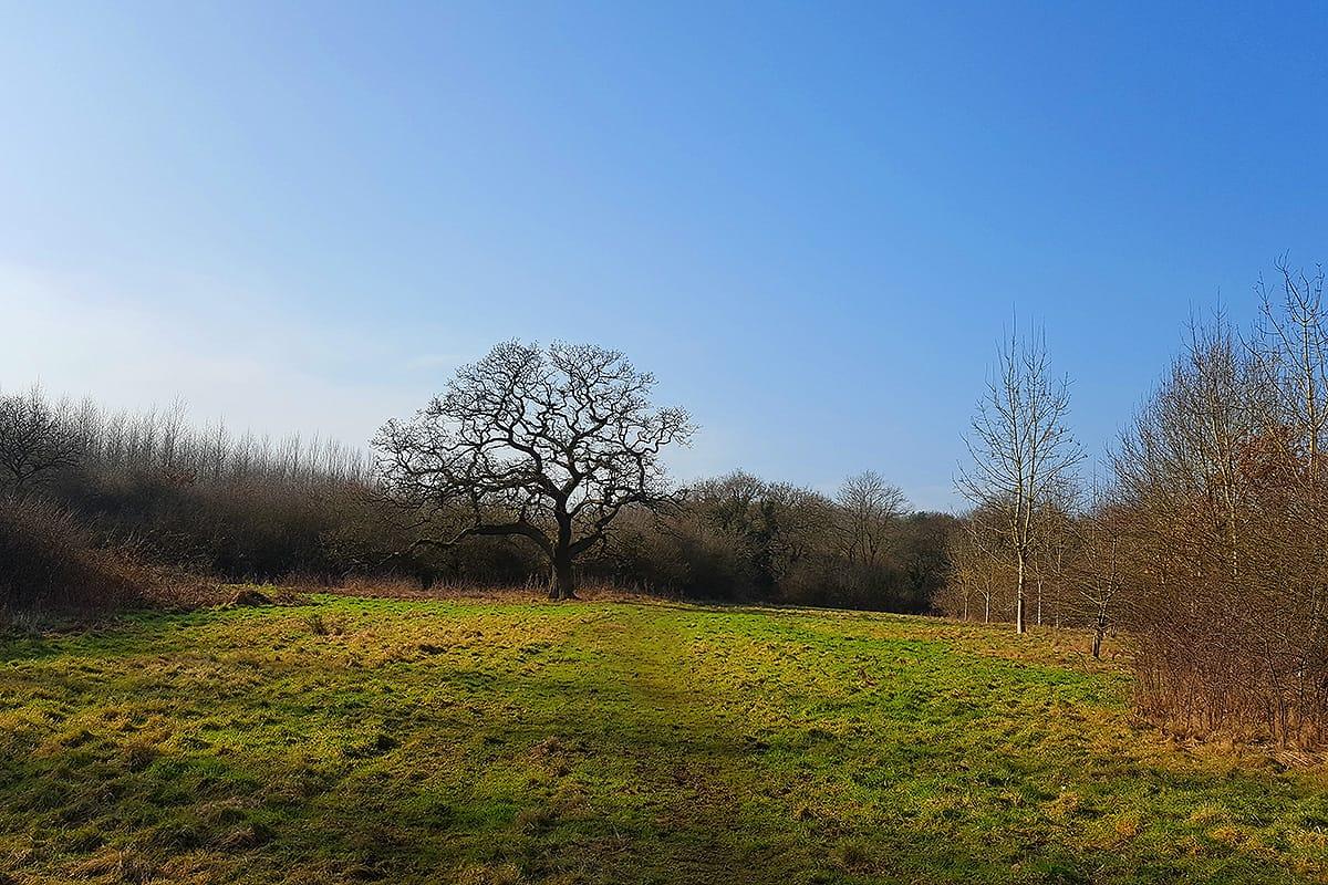 warburtons wood kingsley cheshire