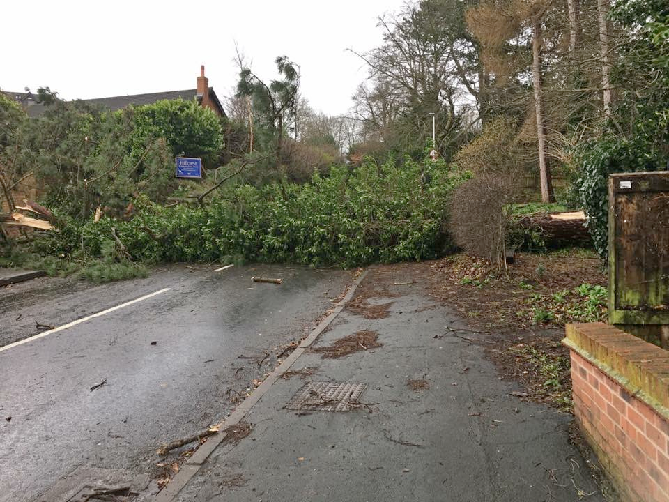 Photo of fallen tree from Manley Road Copse