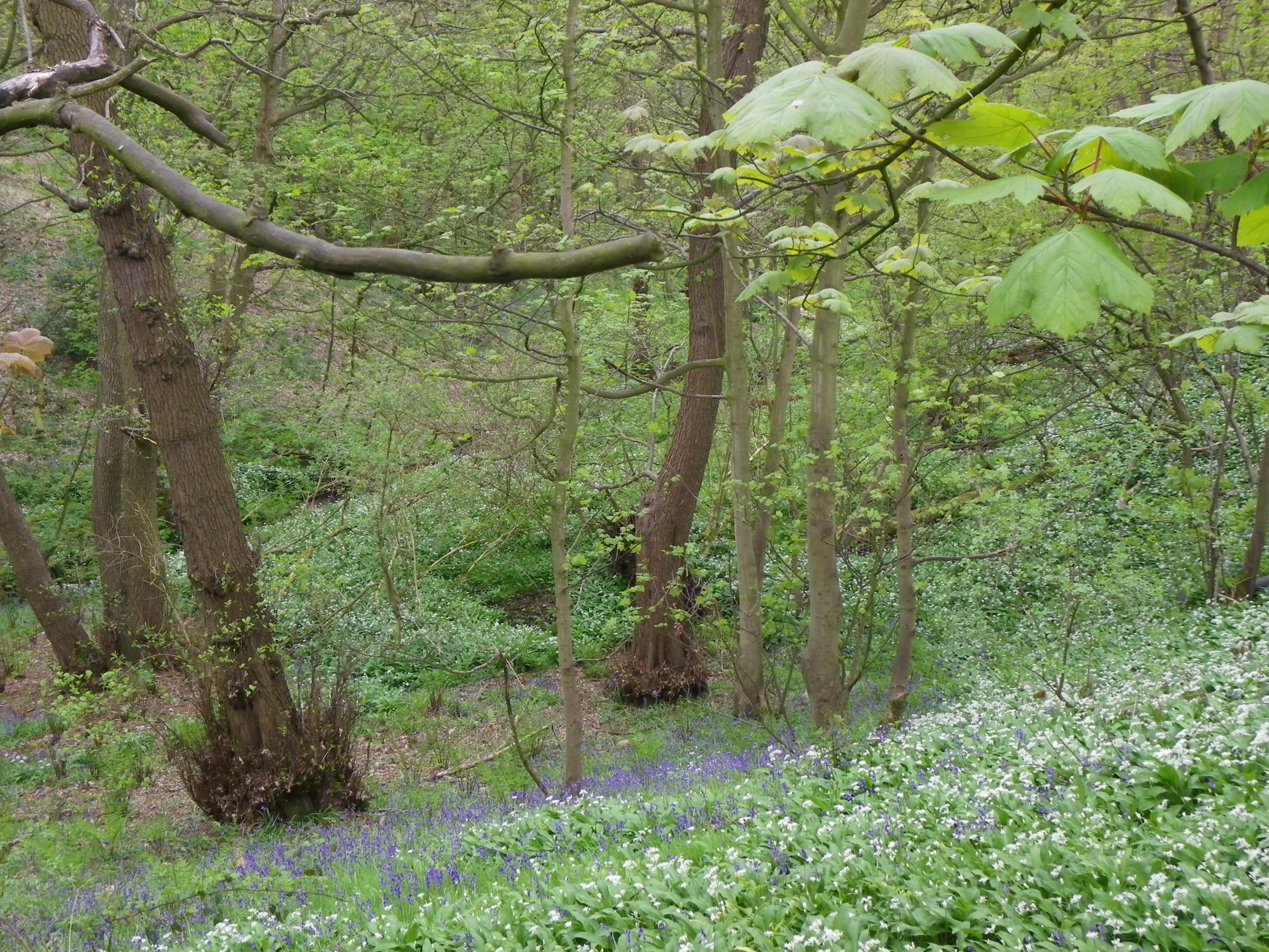 Spring Flowers In Becketts Wood