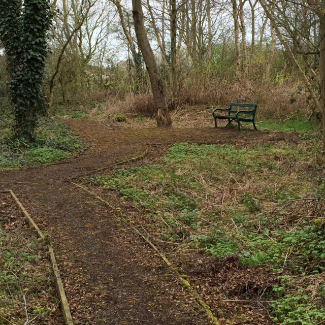 Old path cleared of weeds bench revealed at Frodsham Marshlands Tree Garden.