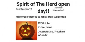 pony sanctuary halloween party tw