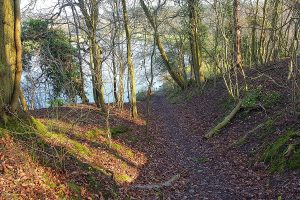 Warburtons Wood path looking down to the River Weaver