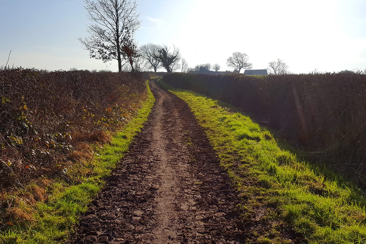 Broad Lane near Bradley in Frodsham, Path 4