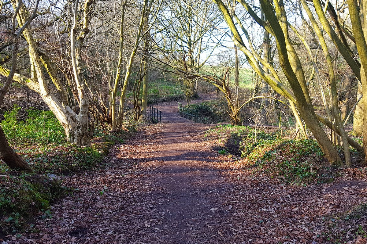 Eddisbury Way at Hob Hey Wood in Frodsham