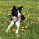Dog Warden and Kennelling Service Consultation